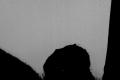 muxetv HunchbackEntertainment Cold Sweat 2015